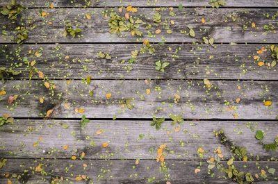 timber-decking-maintenance